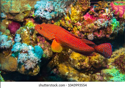 Underwater coral fish close up