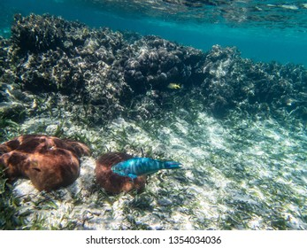 Underwater coral, fish, sand and sea