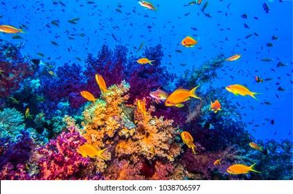 Underwater coral fish shoal landscape