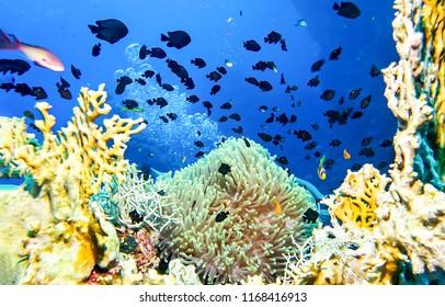 Underwater coral fish shoal landscape. Underwater world panorama. Underwater life macro view
