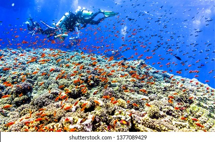 Underwater coral fish shoal view. Underwater world landscape. Underwater life landscape. Underwater coral fishes view