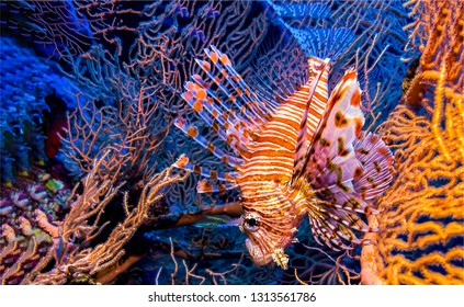 Underwater coral fish view. Underwater fish macro scene. Beautiful underwater coral fish. Underwater world scene