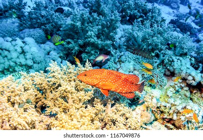 Underwater coral fish view. Underwater coral red fish landscape. Underwater fish close up view