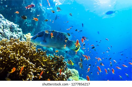 Underwater coral fish view. Underwater world background. Underwater life scene