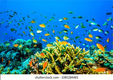 Underwater coral fishes landscape. Coral fishes in underwater scene