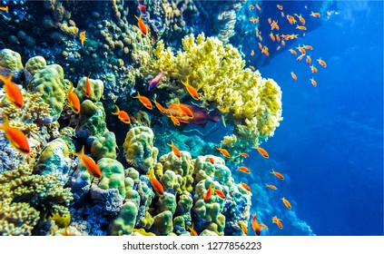 Underwater coral fishes view. Underwater life background. Underwater world scene