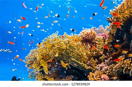 Underwater coral fishes view. Underwater world scene. Coral fishes underwater. Underwater life scene