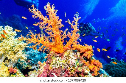 Underwater coral landscape. Orange coral underwater view. Underwater orange coral macro scene. Underwater world macro view