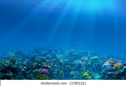 Underwater coral reef background