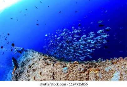 Underwater coral reef fish shoal landscape. Underwater world coral fishes panorama. Underwater world coral fish shoal view. Underwater diving with fishes