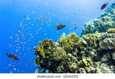 Underwater coral reef fishes