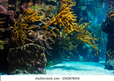 underwater coral reef landscape background in the blue sea with fish and marine life