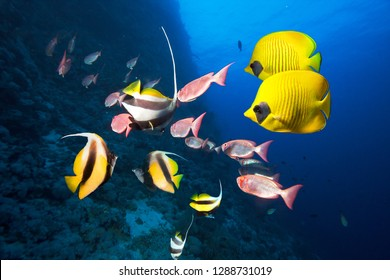 Underwater coral reef landscape in the deep blue ocean with colorful fish and marine life.