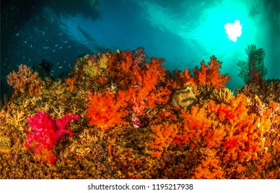 Underwater coral reef landscape. Underwater coral fishes view. Orange underwater coral scene. Underwater orange coral reef view