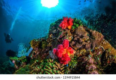 Underwater coral reef landscape. Underwater light rays in underwater world panorama. Underwater world coral fishes view