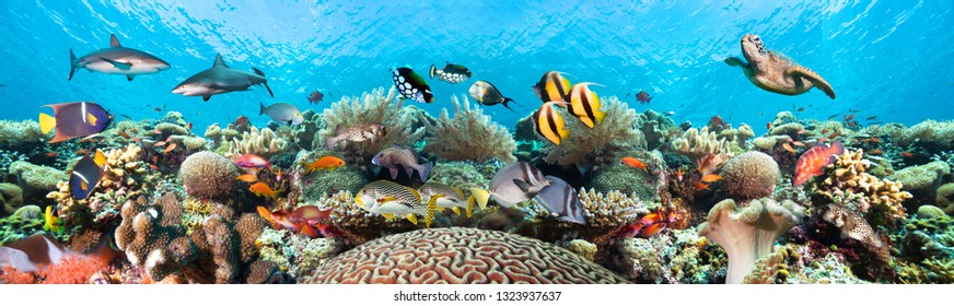 Underwater coral reef landscape super wide banner background in the clear blue ocean with colorful fish and marine life.