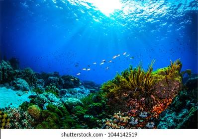 Underwater coral reef in ocean world