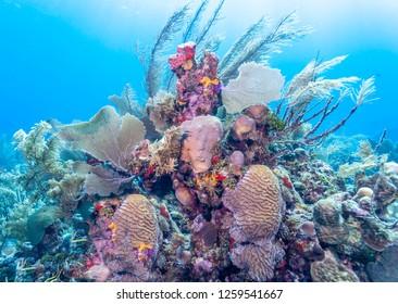 Underwater Coral reef off coast of Roatan