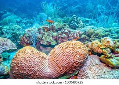 Underwater coral reef off the coast is the island of Bonaire