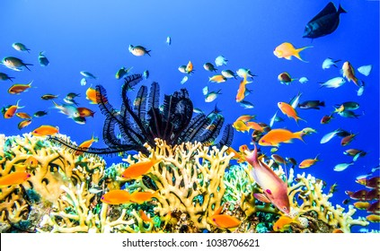 Underwater coral reef panorama