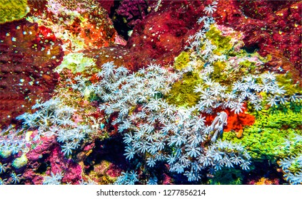 Underwater coral reef scene. Underwater world background. Underwater life scene