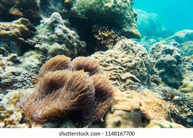 Underwater coral reef sea view landscape
