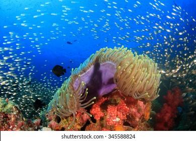 Underwater coral reef with tropical fish in ocean