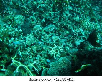 underwater coral reefs tropical gorontalo celebes indonesia
