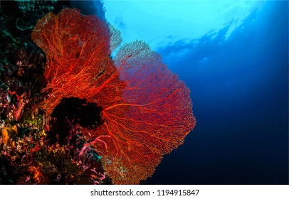 Underwater coral scene. Red coral underwater. Underwater red coral landscape. Underwater world coral view