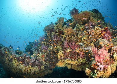 underwater coral and seafan at thailand