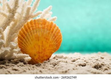 Underwater coral, shells and sand. Sea scene.