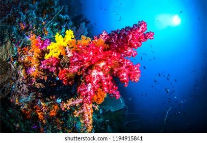 Underwater coral view. Red coral underwater scene. Underwater world coral landscape. Underwater coral view