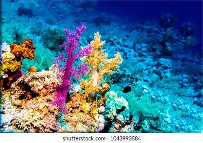 Underwater coral world scenery
