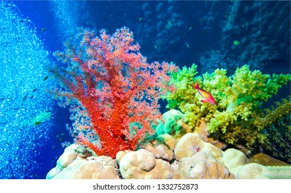 Underwater coral world view. Underwater coral fish scene. Coral fish underwater. Underwater coral world view