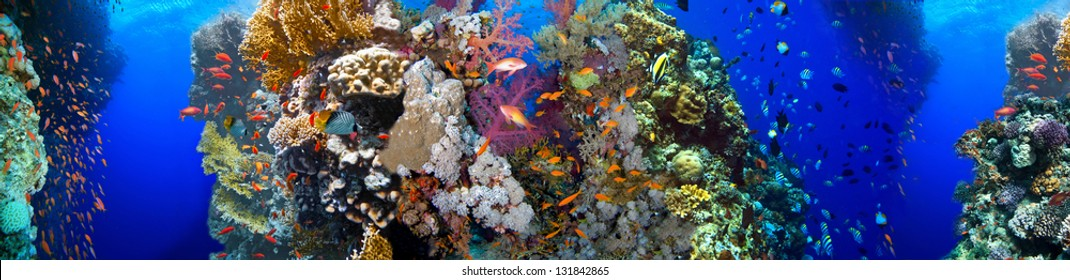 underwater, corral, panorama, fish