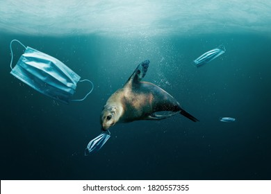Underwater debris and trash after Covid-19 coronavirus pandemic. Sea lion with medical surgical mask in mouth due to covid pollution. Environmental ecology rubbish concept.