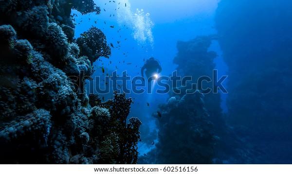 Подводный дайвер в подводном мире ландшафта