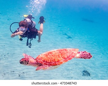 Underwater with divers, turtles and pelicans Views around Curacao a small Caribbean Island in the Netherland Antilles