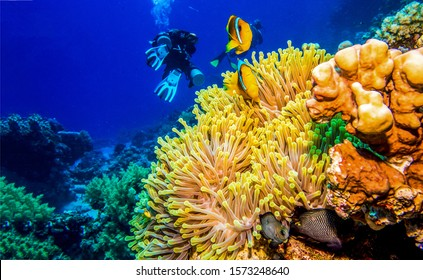 Underwater diving scene with coral fish