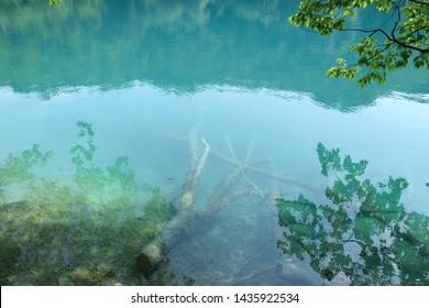 Underwater fallen tree in Plitvice Lakes National Park (Nacionalni park Plitvicka jezera). Karlovac County, Croatia.