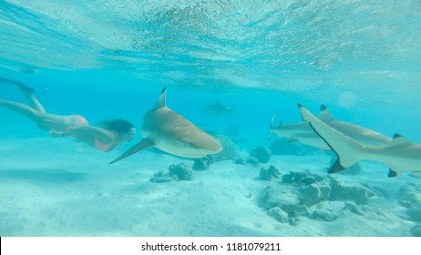UNDERWATER: Fearless young female swims in the crystal clear exotic sea with blacktip sharks. Stunning view of woman tourist diving in shark infested tropical waters near remote island in the Pacific.