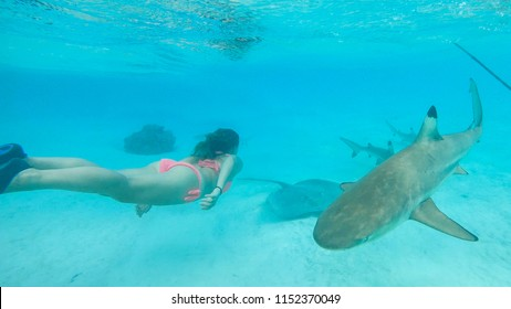 UNDERWATER: Female snorkeler observing the friendly sharks swimming around her. Adventurous woman on vacation goes swimming in the turquoise ocean with blacktip sharks. Beautiful tropical sea life.