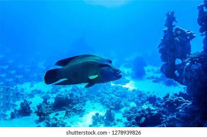 Underwater fish landscape. Deep water fish view underwater. Underwater deep water fish view
