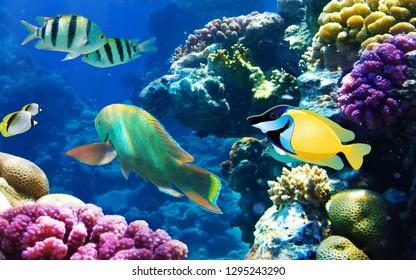 Underwater  fish landscapes  background