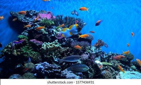 Underwater fish at Monterey Aquarium