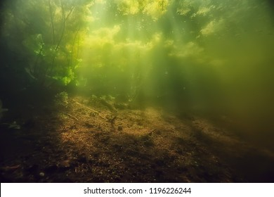 underwater freshwater green landscape / underwater landscape of the lake ecosystem, algae, green water, fresh water