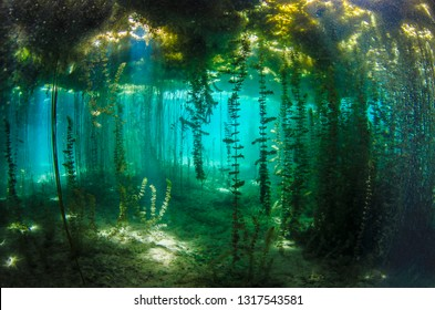 Underwater freshwater. Mysterious freshwater river. Spring water