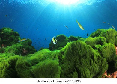 Underwater green algae blue ocean and fish