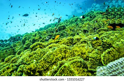 Underwater green world landscape. Green underwater world scene. Underwater life landscape. Underwater world view