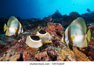 Underwater image of coral reef and fish.